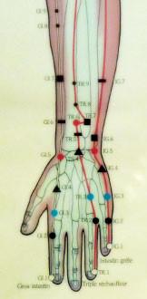 Représentation schématique des méridiens du bras