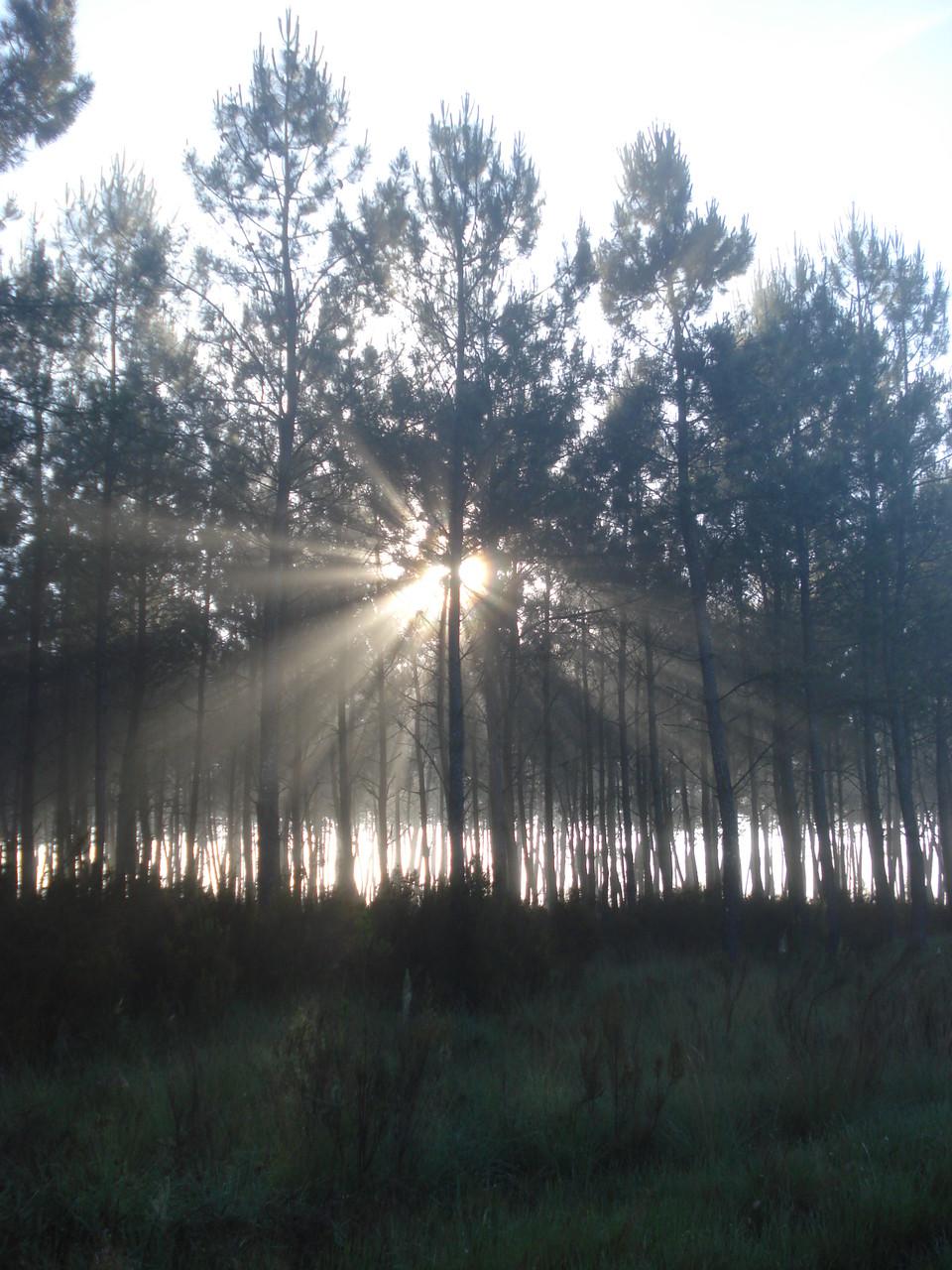 La forêt en Gironde - Emmanuelle Mazik-Lauritzen Bordeaux Place Simiot