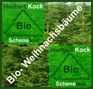 Zu Bio- Weihnachtsbäume