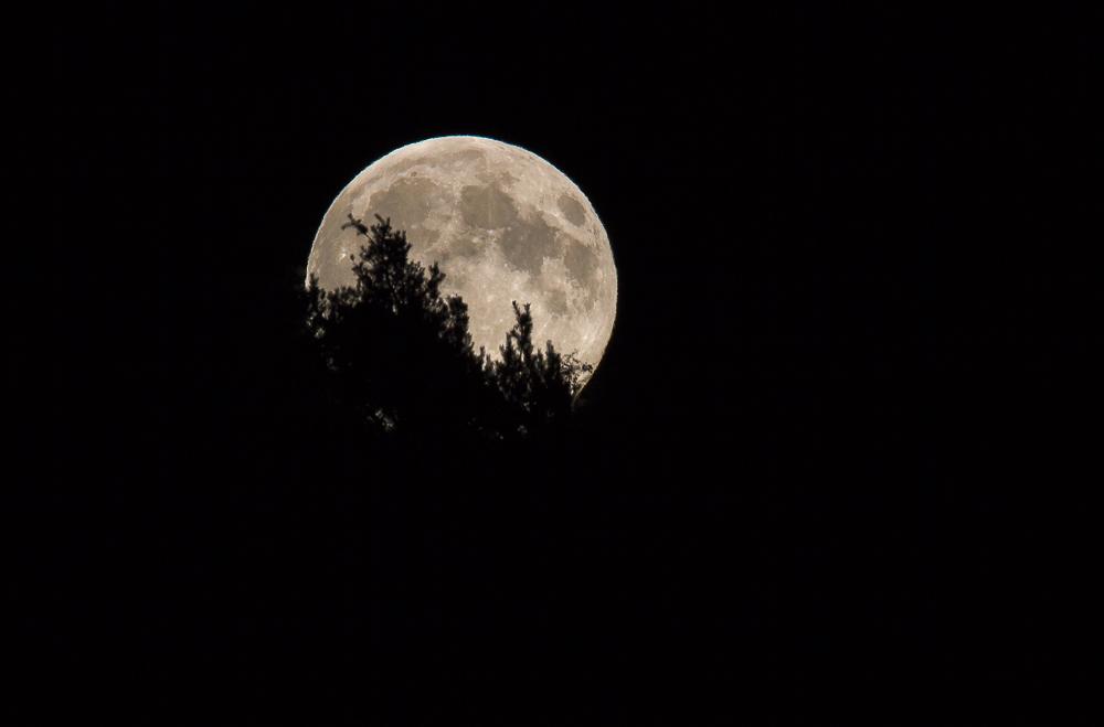 2015-08-29 à 21h50 heure locale française. Lever de la pleine lune sur le massif vosgien, éclairement 100% _ 840mm EOS APSC