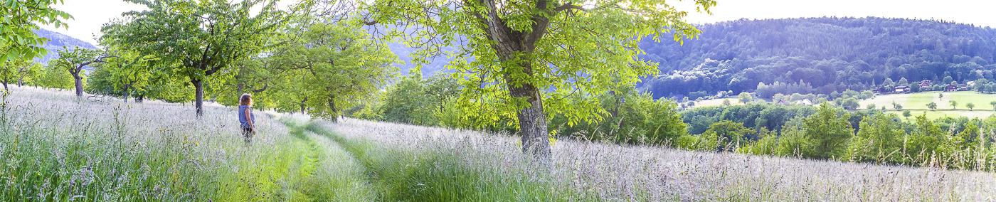Vosges Reinhardsmunster - panoramique HDR - tirage 290mm X 860mm pleine feuille ou 180mm X 575mm avec marges - 110€ réf: payspan-003