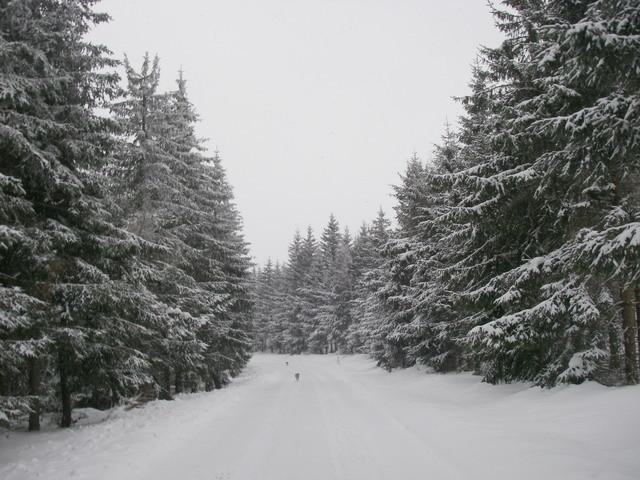 La route ? sous la neige ..le goudron !