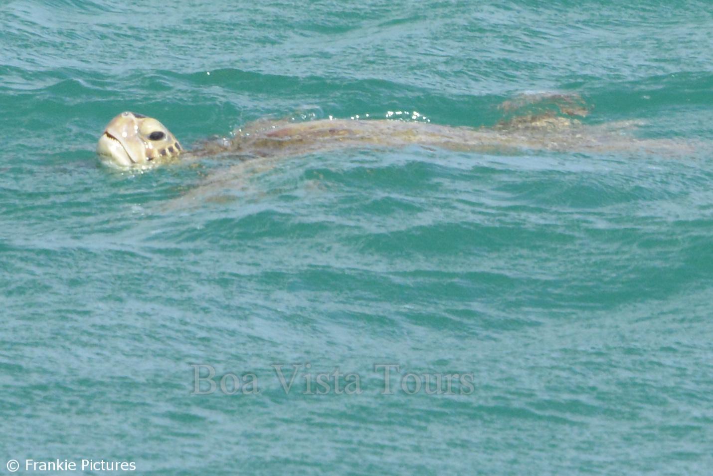 manchmal sehen wir auch eine Schildkröte