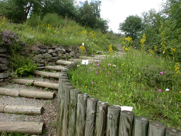 Le jardin en 2004, 2005 et 2006 où ont été prises les photos ci-dessus