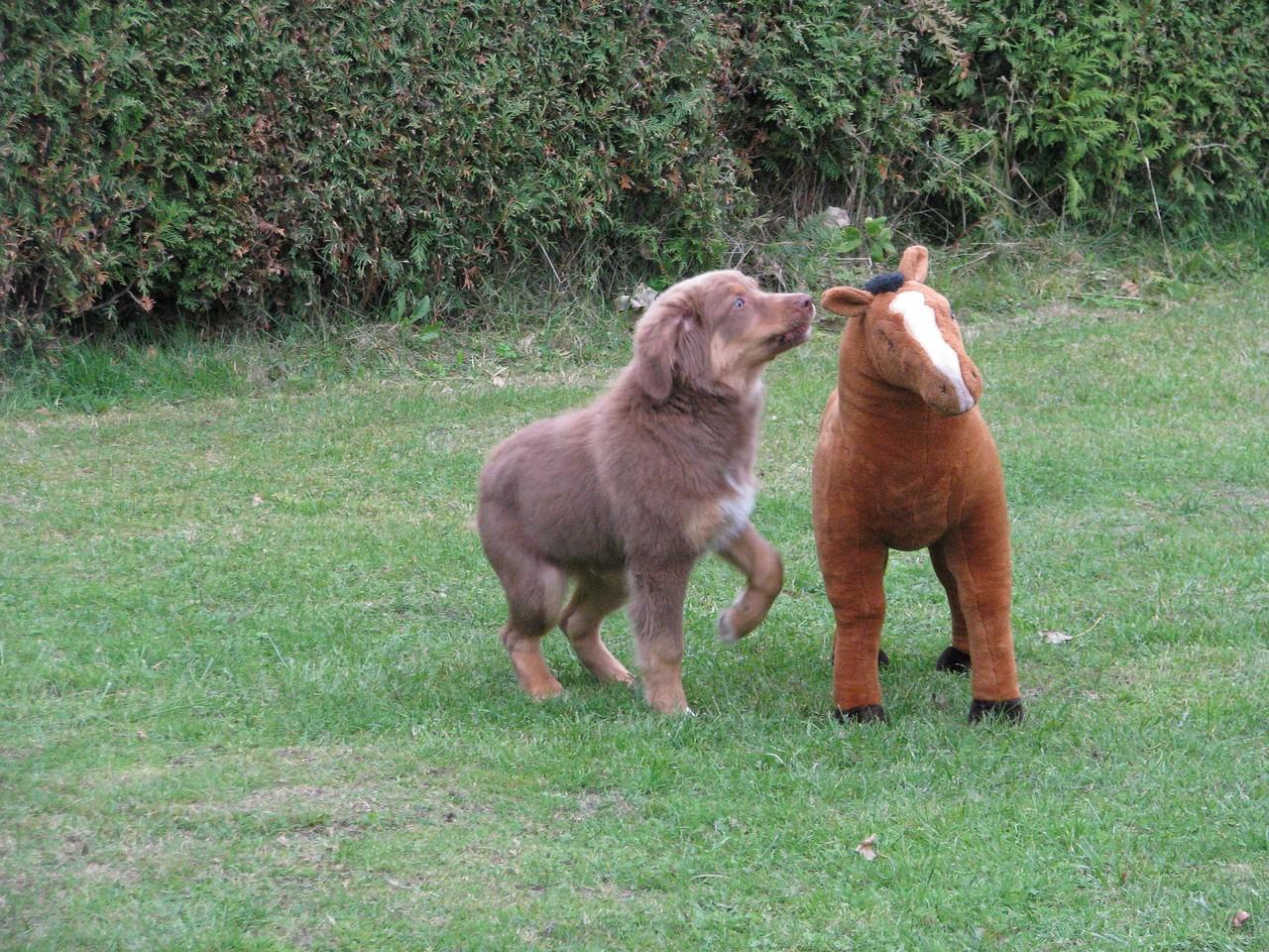 Teddy muss nun doch mal schnuppern