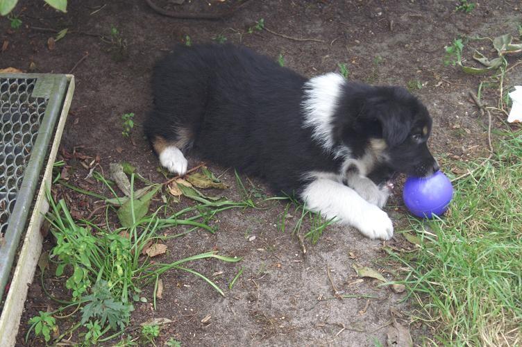Ayana spielt mit dem Ball