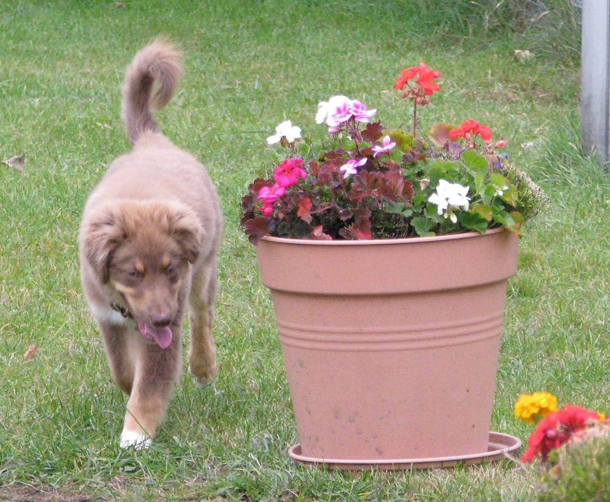 Luca schaut sich derweil mal die Blumen an