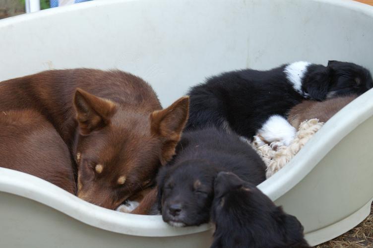 Mit Hikka im Hundekorb