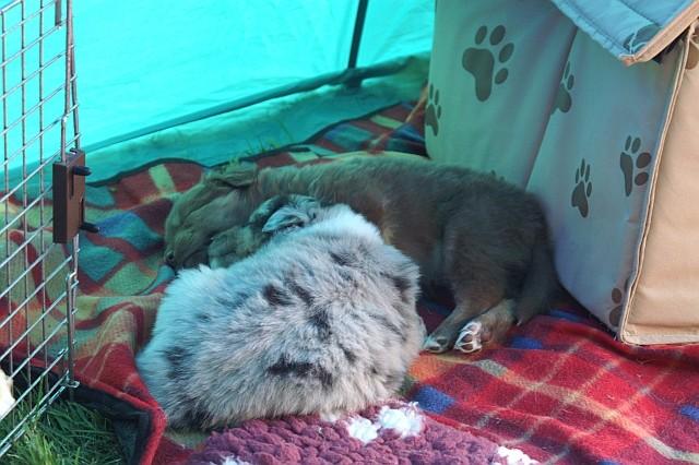 Baira und Brise schlafen dicht beieinander