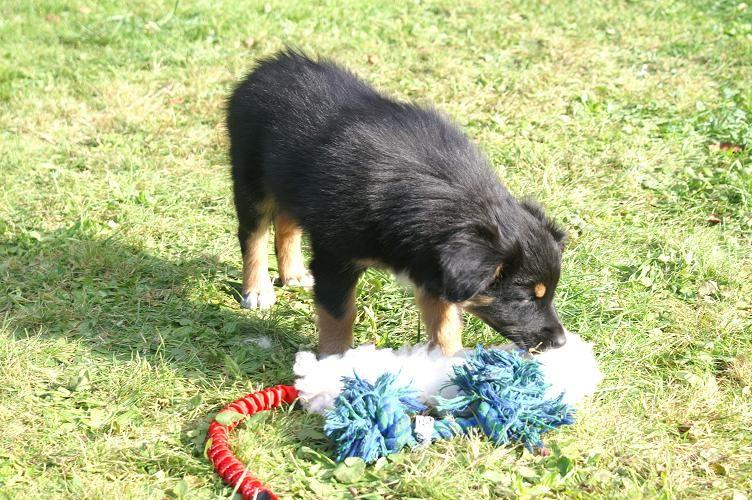 Assra sucht das Spielzeug