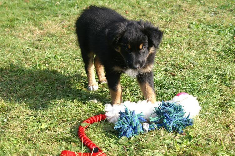 Assra hat das Spielzeug gestellt