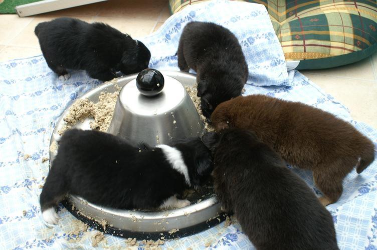 Alle bei der ersten Fütterung