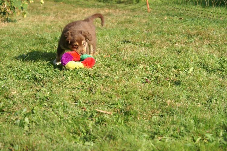 Amber holt das Spielzeug