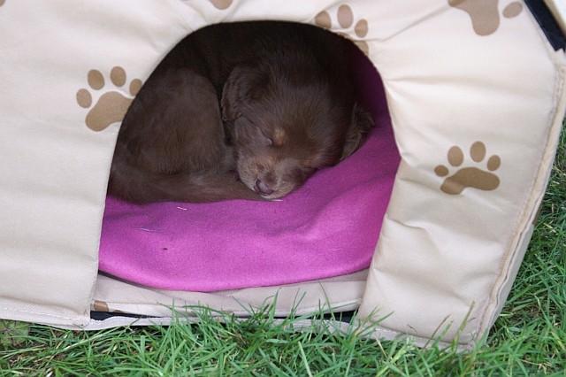 Baira schläft im Häuschen