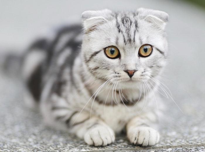 Hoe zorg je voor je kat als je veel van huis bent