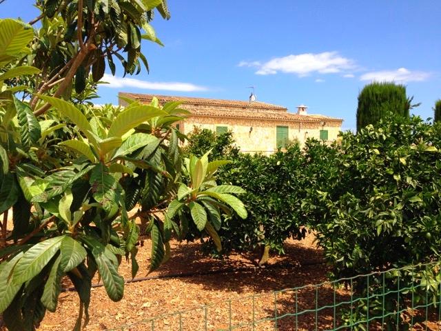 Unser privater Orangen-und Zitronenhain
