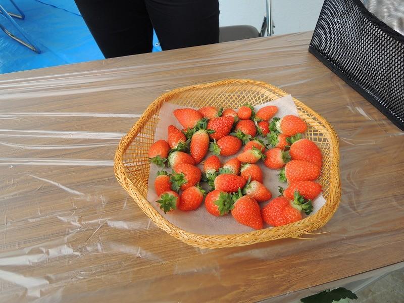 展示イチゴ
