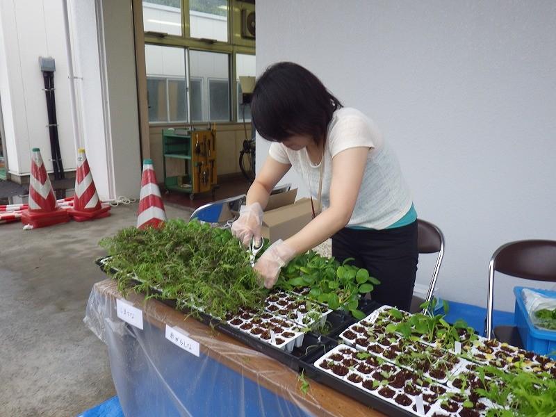 野菜収穫中