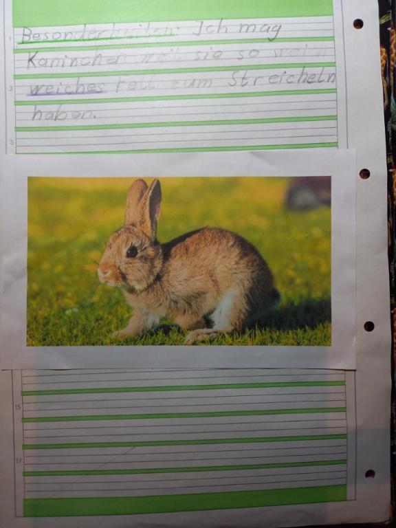 Wunschhaustier: Kaninchen von Fiona, Kl. 1/2c