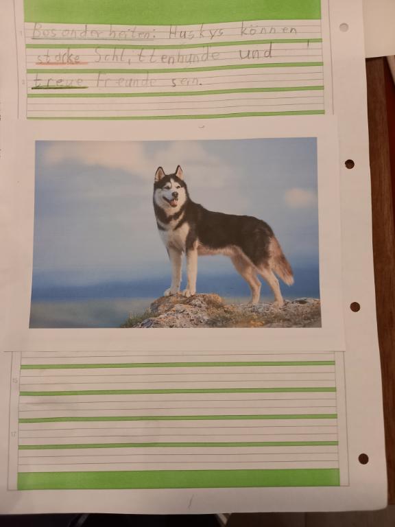 Wunschhaustier: Husky von Lars, Kl. 1/2c