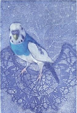 """Takako Hirano """"Pon"""" petite perruche ondulée du paradis -gravure - 2012 -15x10cm"""