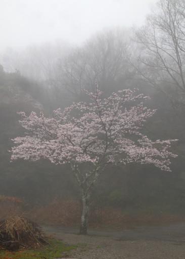 「 霧  中 」   奈良・信貴山     永井三郎