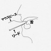 タンギングをした時の舌の状態
