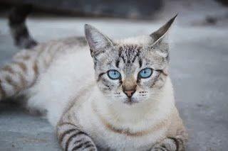 Kann eine Katze ein Engel sein?
