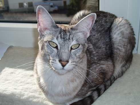 Meine  liebe Katze Mimi
