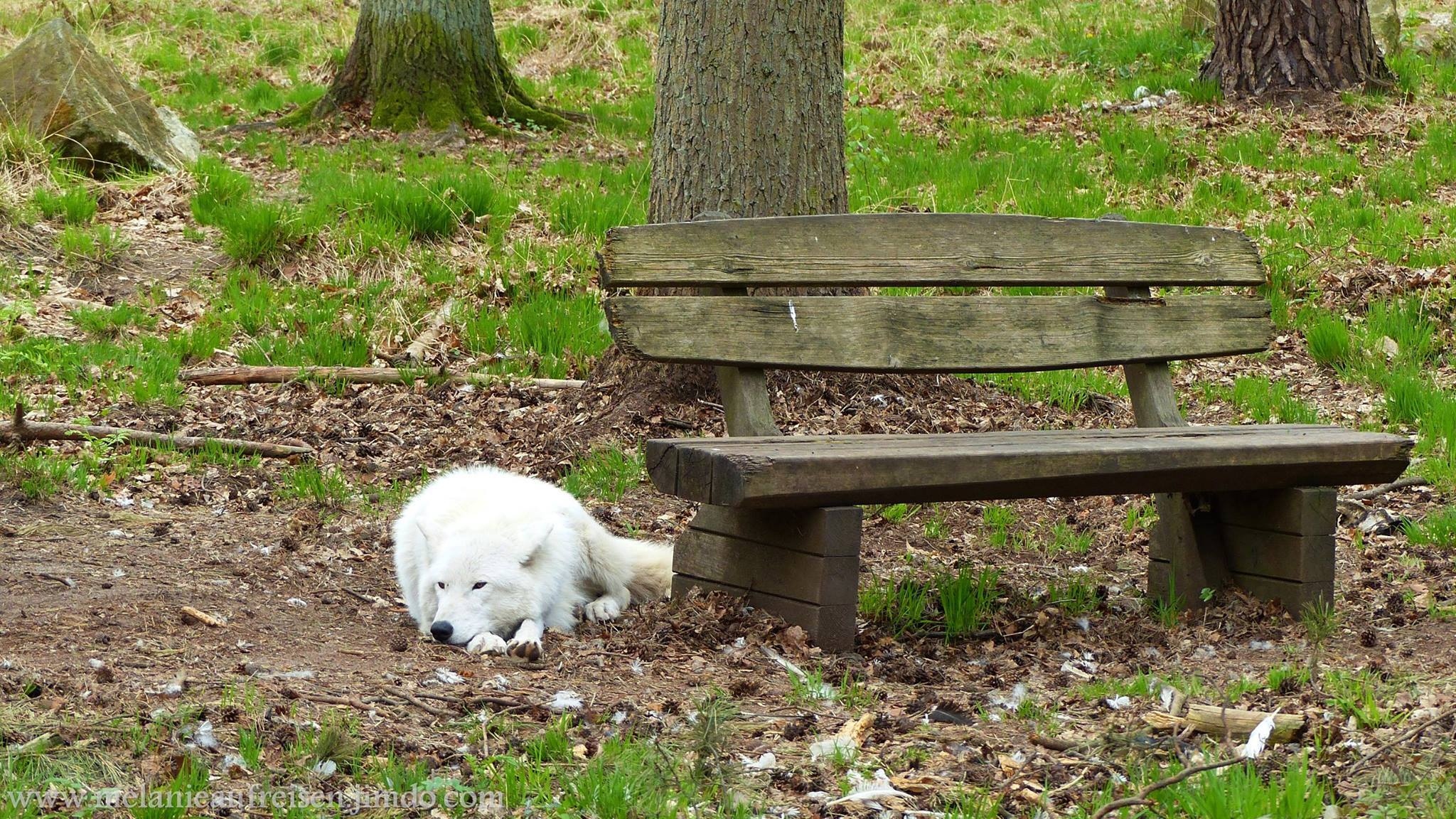 """Tierpark """"Alte Fasanerie"""" in Hanau Klein-Auheim"""