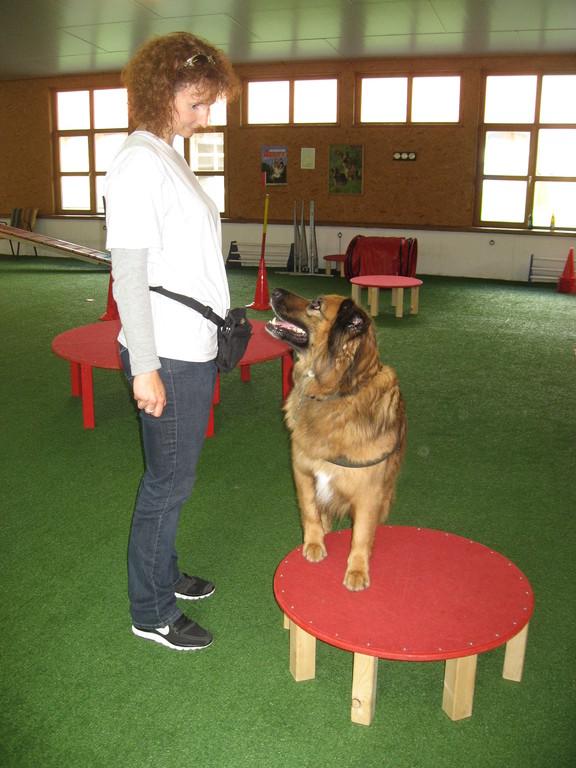 """Sabine und Lenny bei der Übung """"Hocker"""""""