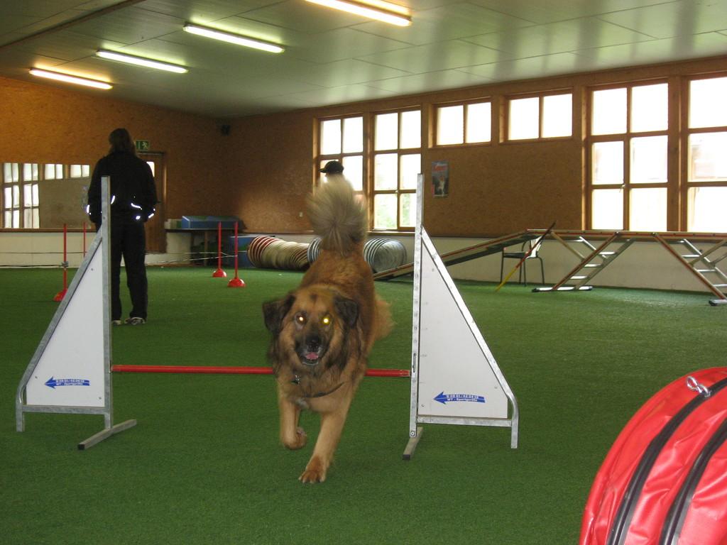 Lenny im JAD-Dogs-Kreis