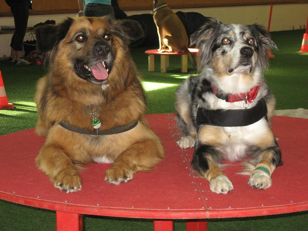 Lenny und Kyra auf dem großen Tisch