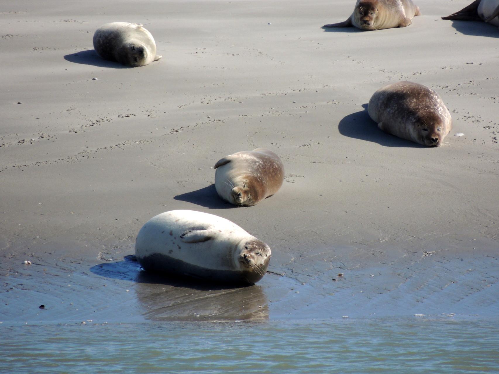les phoques vous attendent dans la Baie
