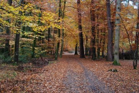 Forêt de Tronçais, photo JF Gosset