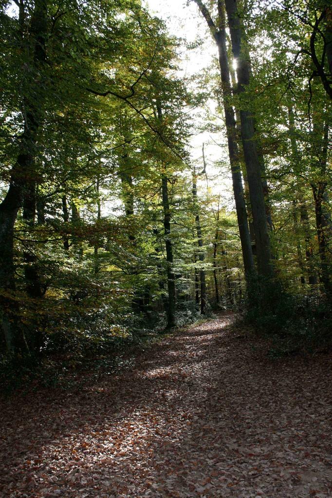 Sous-bois en Forêt de Tronçais