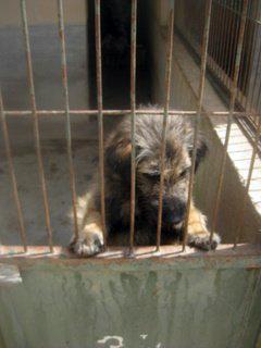 Layko - 2011 in der Tötung