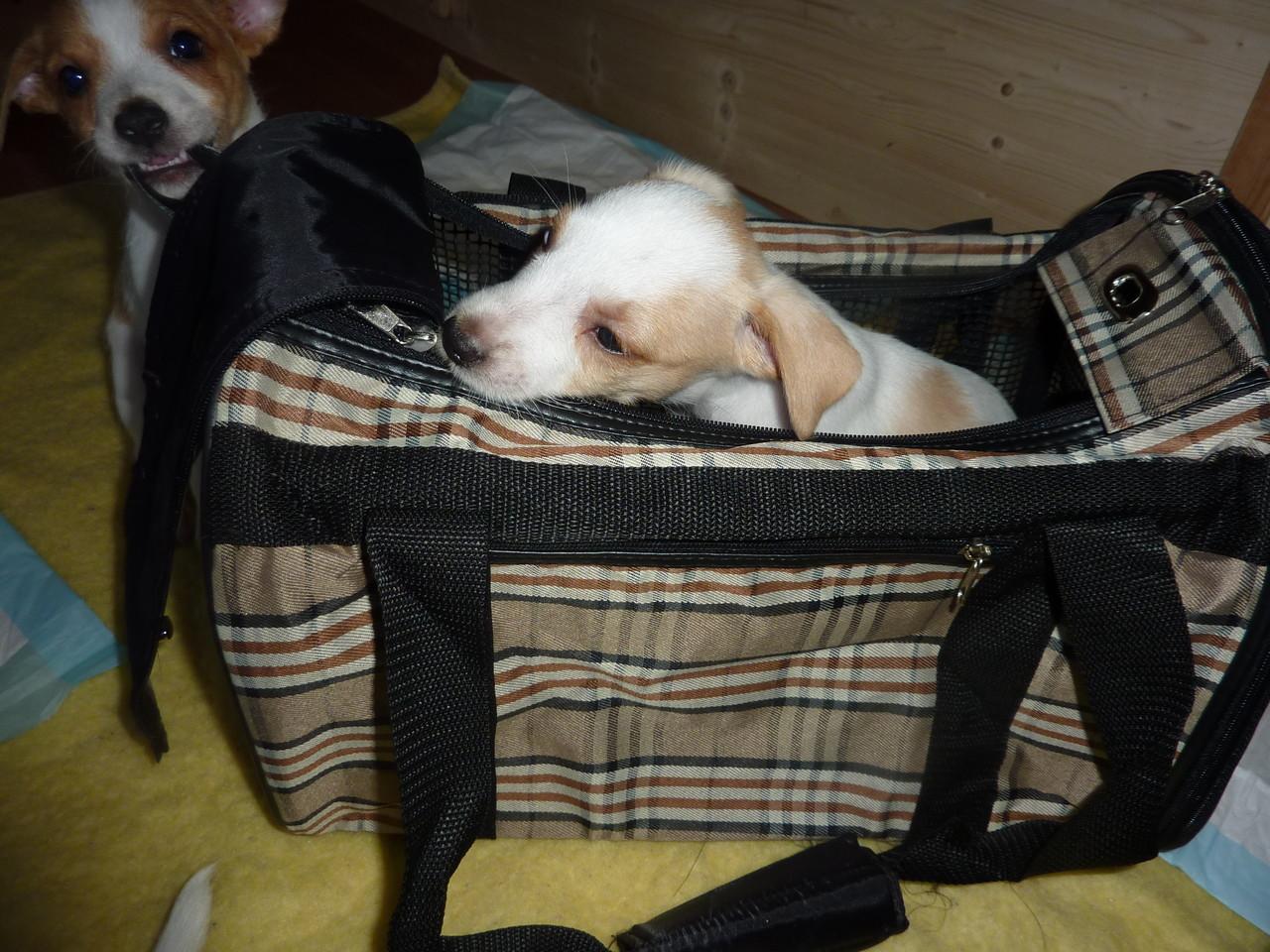 Akira in ihrer Flugtasche