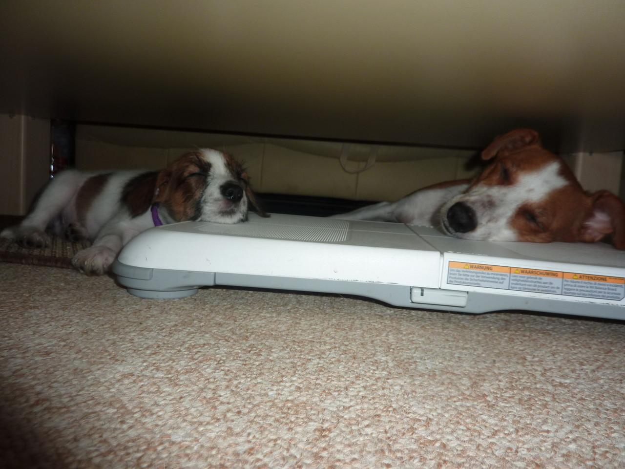 """Ginger mit Ammy, beide die Wii als """"Kopfkissen"""""""