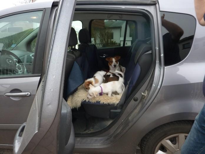 Auto fahren üben