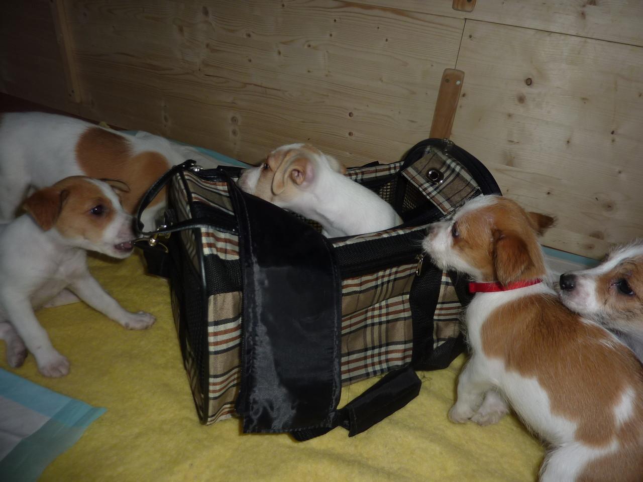 Alle finden die Tasche sehr interessant
