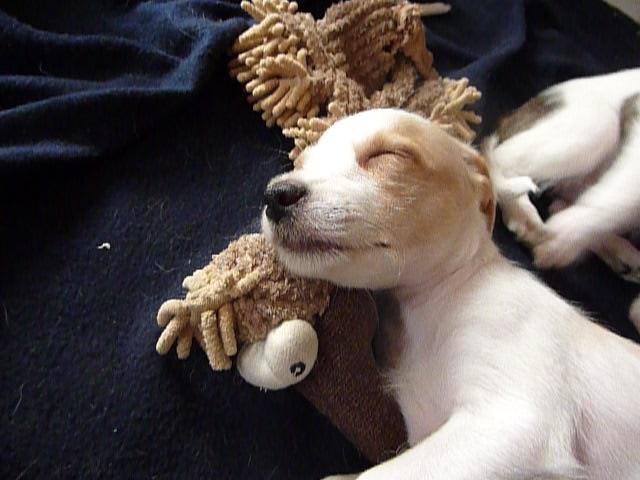 Akira schläft