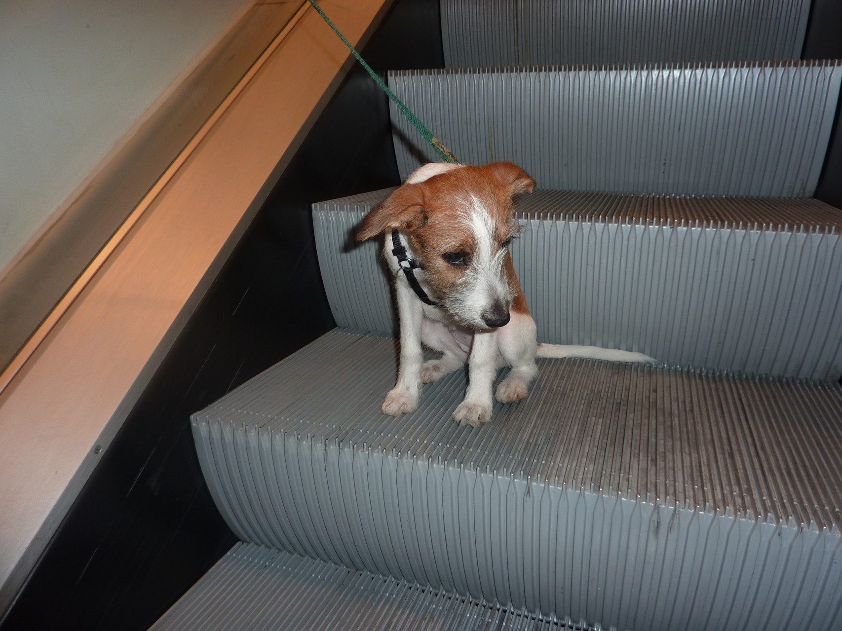 Nur fürs Foto raufgesetzt -Rolltreppe war außer Betrieb !