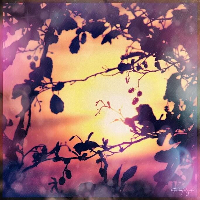 Sonnenuntergang -  Ein einsamer Baum wächst in den Himmel.