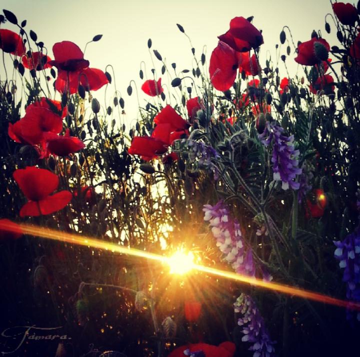Erinnerungen sind wie Blütenstaub auf einer großen Blumenwiese. Bisweilen störend, manchmal betörend. Aber stets der Quell für das Neue in unserer Lebenswiege.