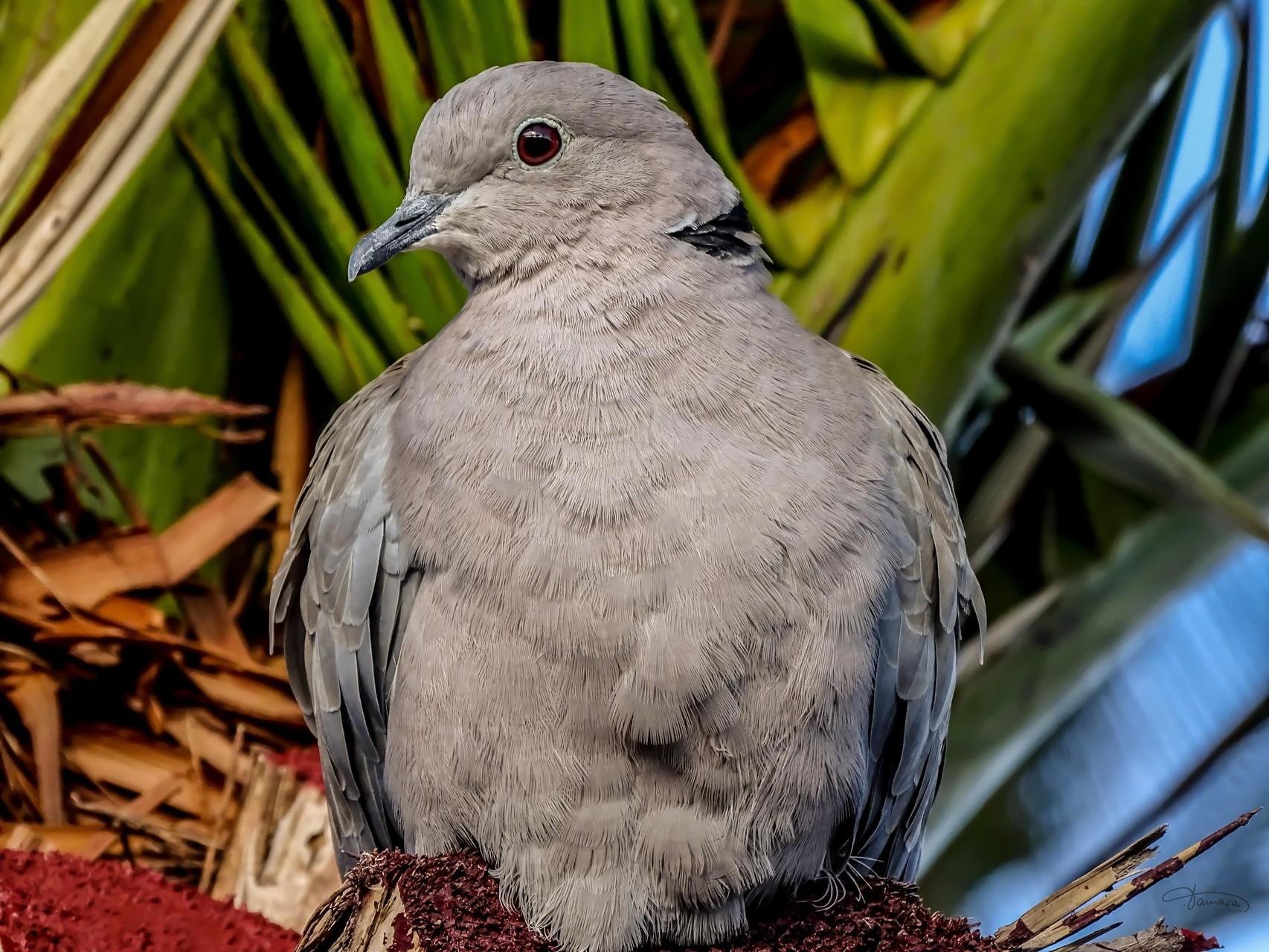 Nicht alle weißen Vögel sind Tauben.