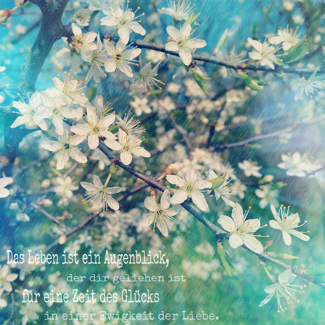 Das Leben ist ein Augenblick der dir geliehen ist für eine Zeit des Glücks in einer Ewigkeit der Liebe.