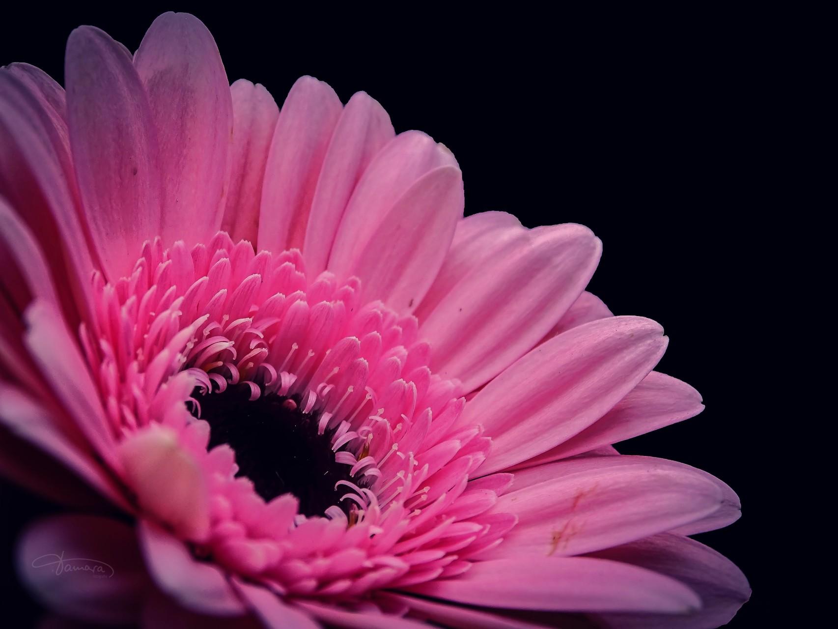 Frühling ist Leben der Liebe und Liebe Frühling des Lebens