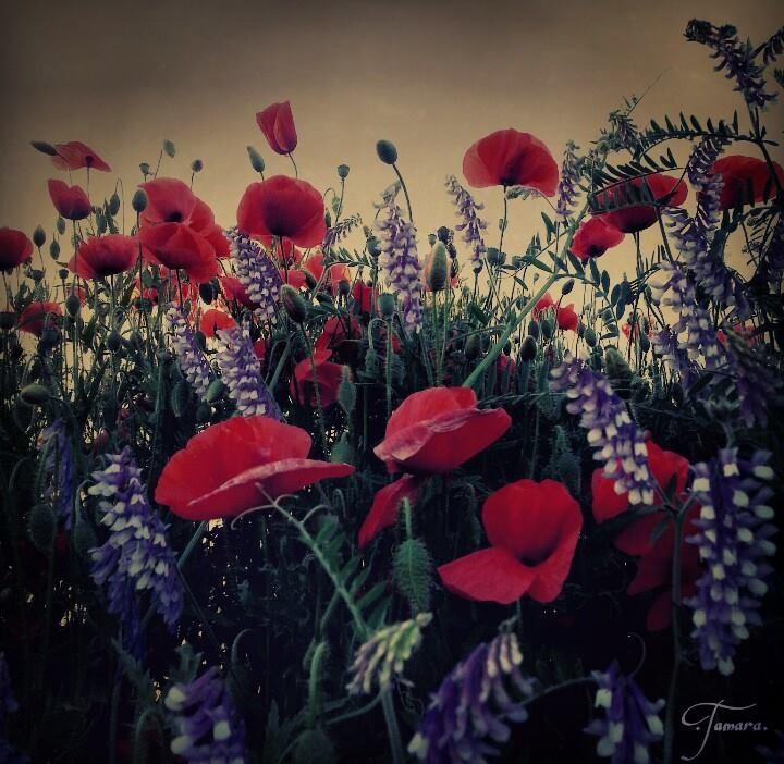 Jeden Tag wie der Frühling erwachen: Mit Sonne im Herzen, mit Schmetterlingen im Bauch und mit der Lust und Laune einer ganzen Blumenwiese.