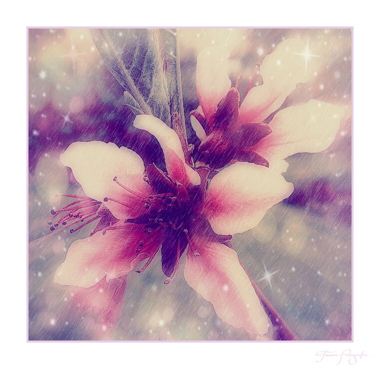 Die schönsten Träume werden mit offenen Augen geträumt.